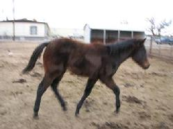 filly for adoption
